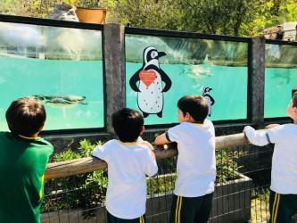 Zoo Metropolitano 1st grade